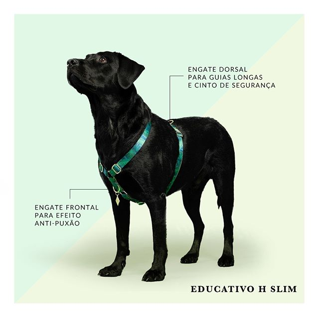 Peitoral Dog U H Slim Educativo New York 2